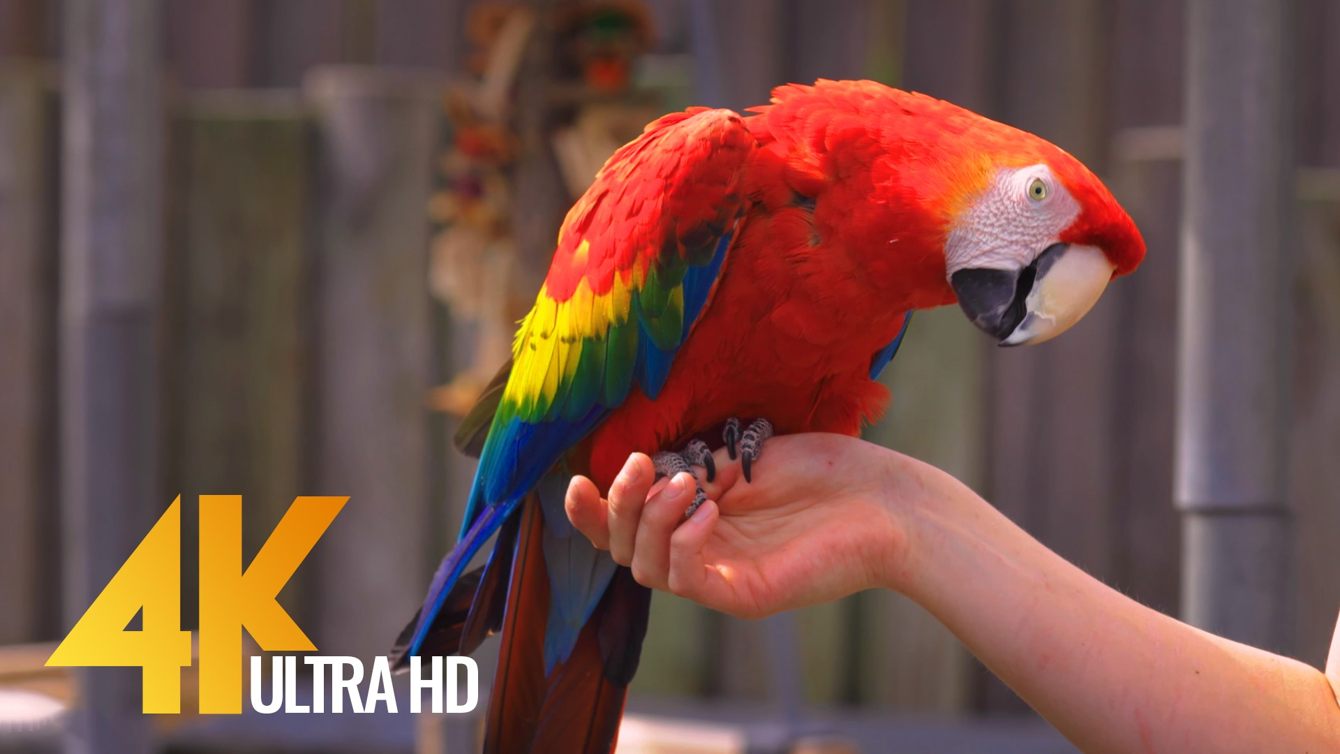 Colorful Parrots with Relaxing Music and Bird Sounds
