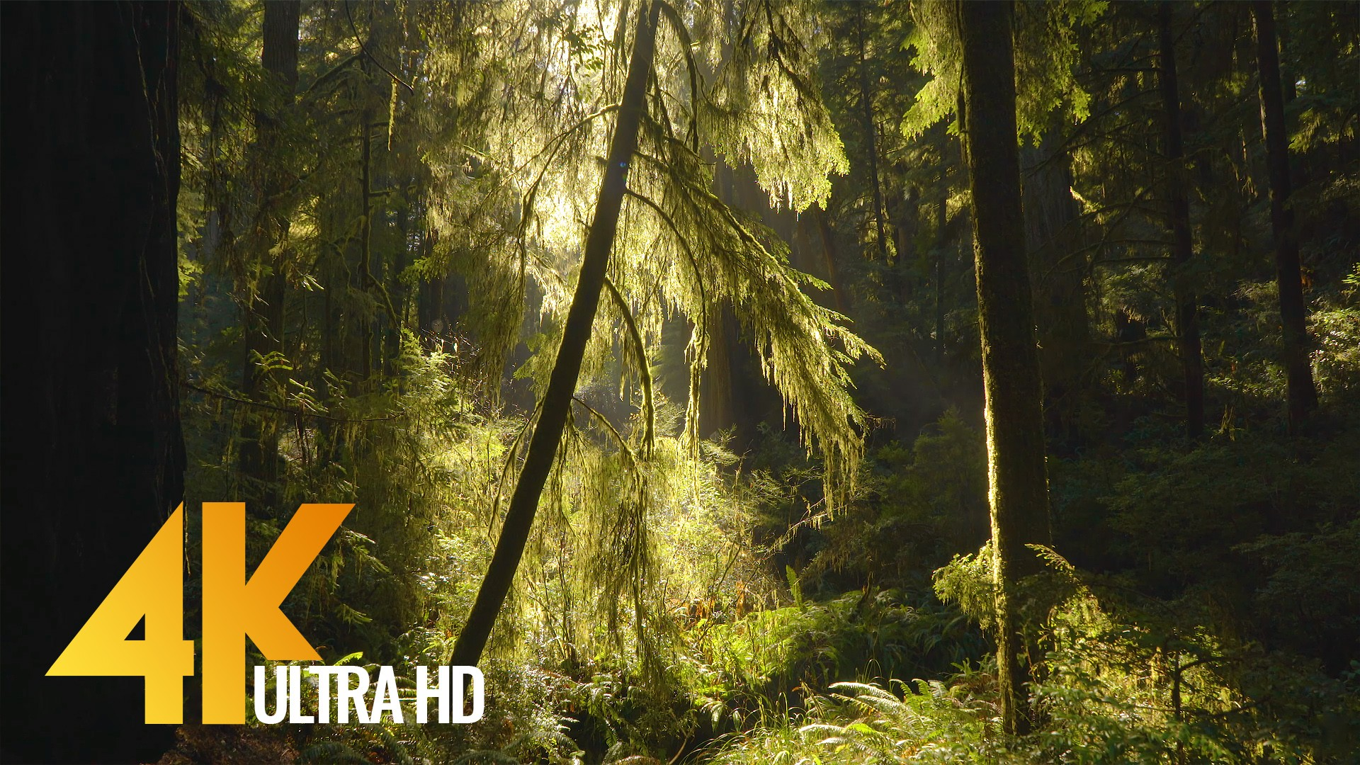 8 Hours of Relaxing Sounds of Water Stream in the Morning Forest for Sleep & Study in 4K Resoluciaon