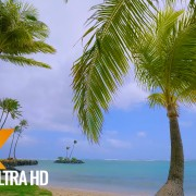 4K Beach Scene - Pacific Ocean Beach with Palm Trees - 5 HRS