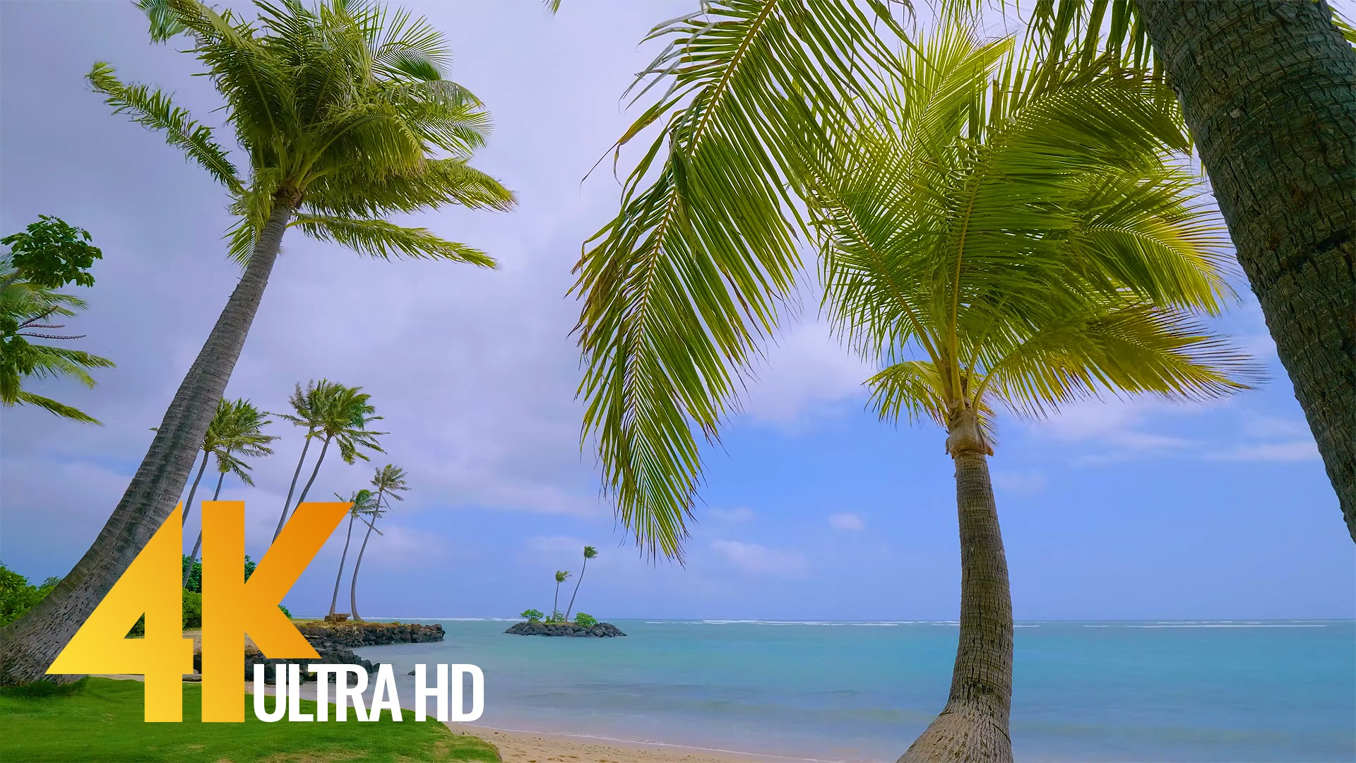 4K Beach Scene – Pacific Ocean Beach with Palm Trees – 5 HRS
