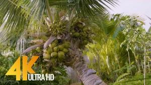 Crooked Palm Tree