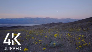 DEATH VALLEY WILDFLOWERS 10 HOURS