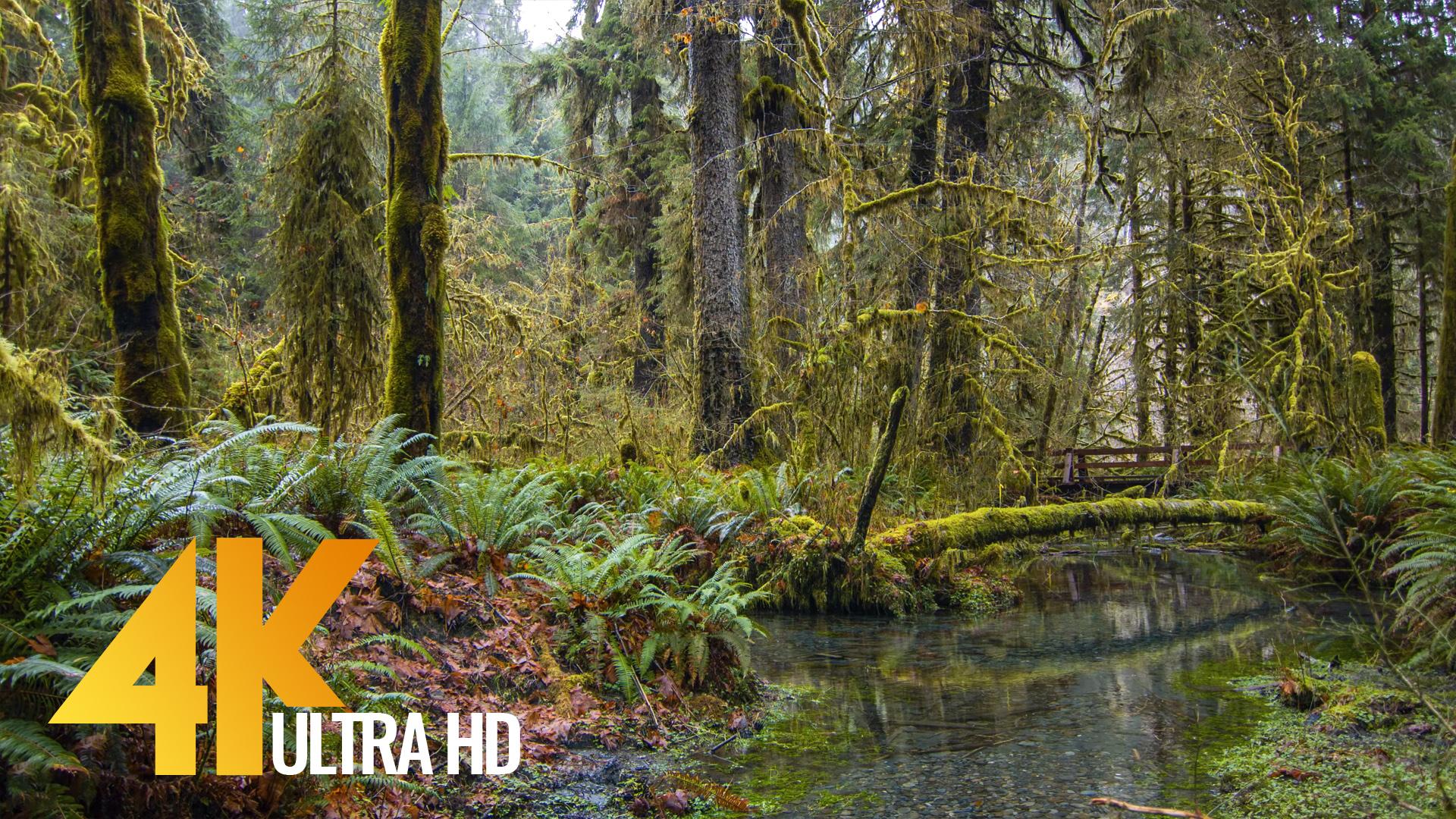 Hoh Rain Forest Stream – Nature Sounds and 4K Footage – 10 HRS for deep  relax
