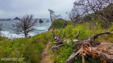 Crescent beach trail 8