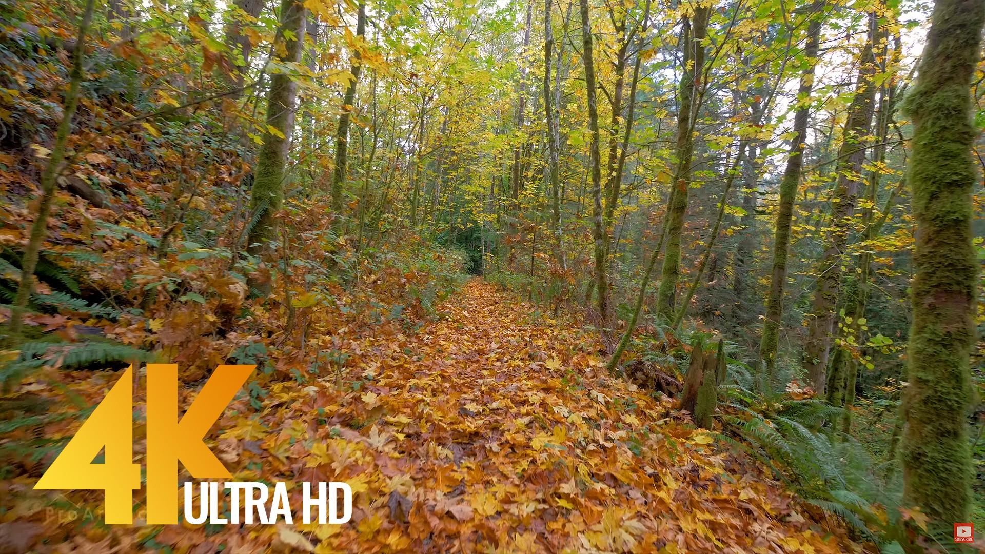 Autumn Walk Trail 2