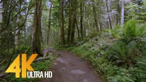 Grand Ridge Trail, Issaquah, WA