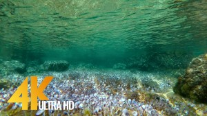 Underwater of the Adriatic Sea
