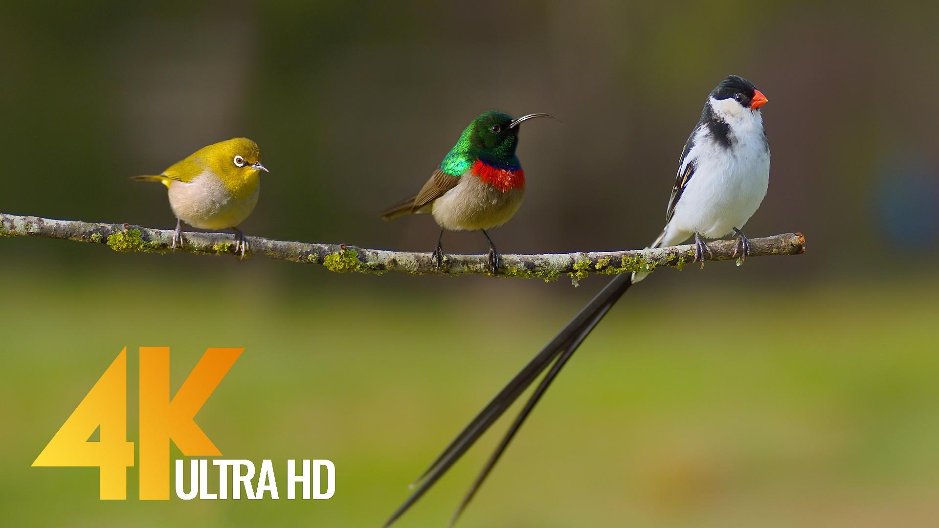 African Wildlife BIRDS 3