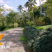 4k-hawaii-walk