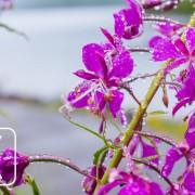 Spring Flowers - 8K