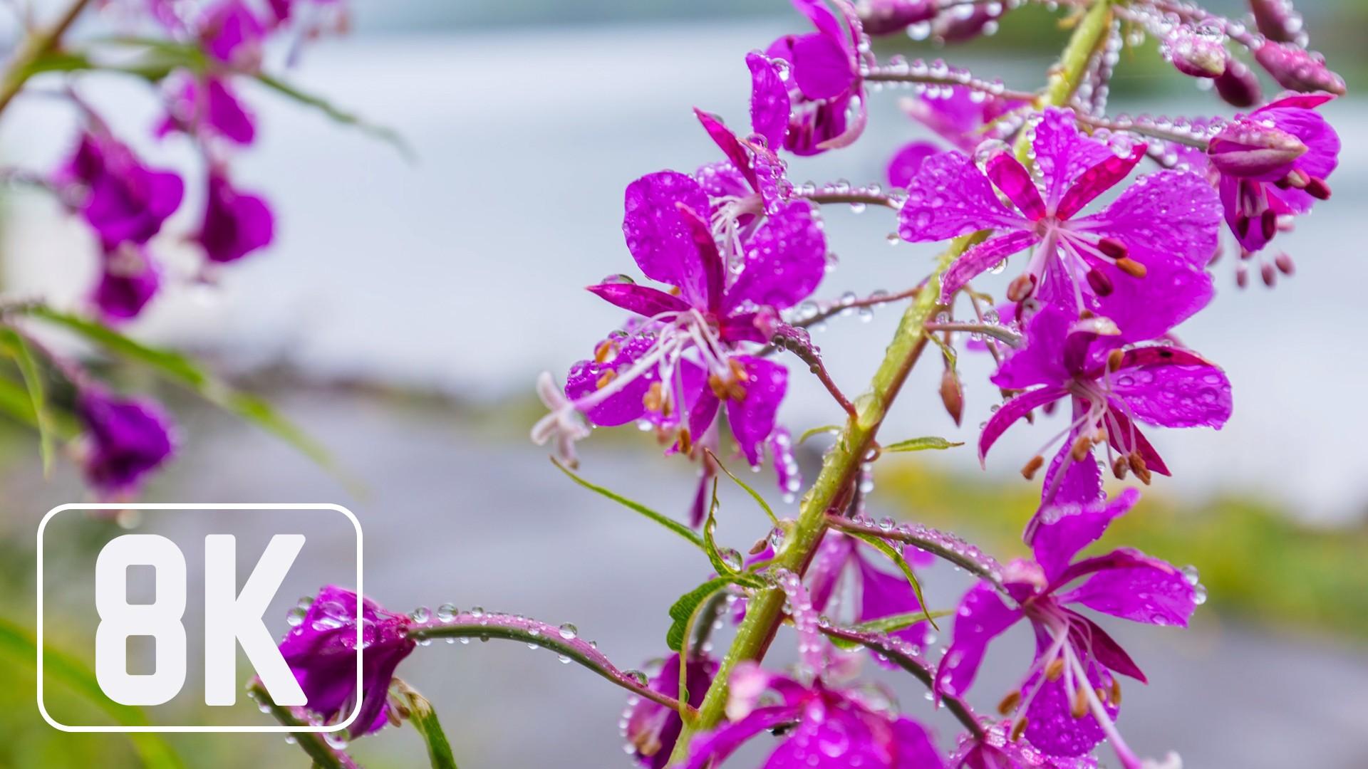 Spring Flowers – 8K