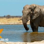 elephant-african-wildlife
