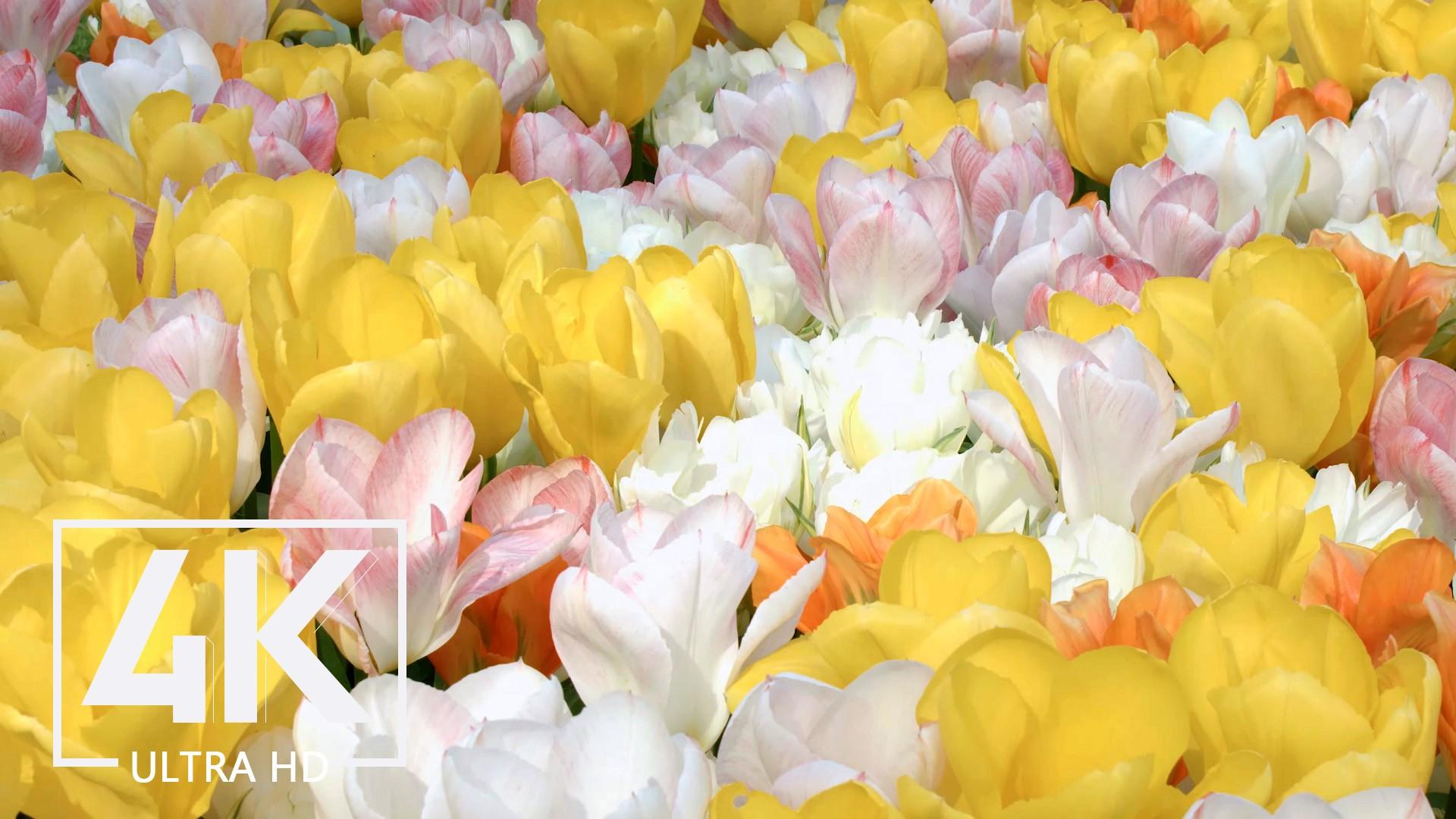 flowers-4kuhd