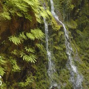 Enchanted Valley Creek