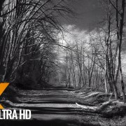 Walking Tour along Coal Creek Trail - Infrared Camera Black & White