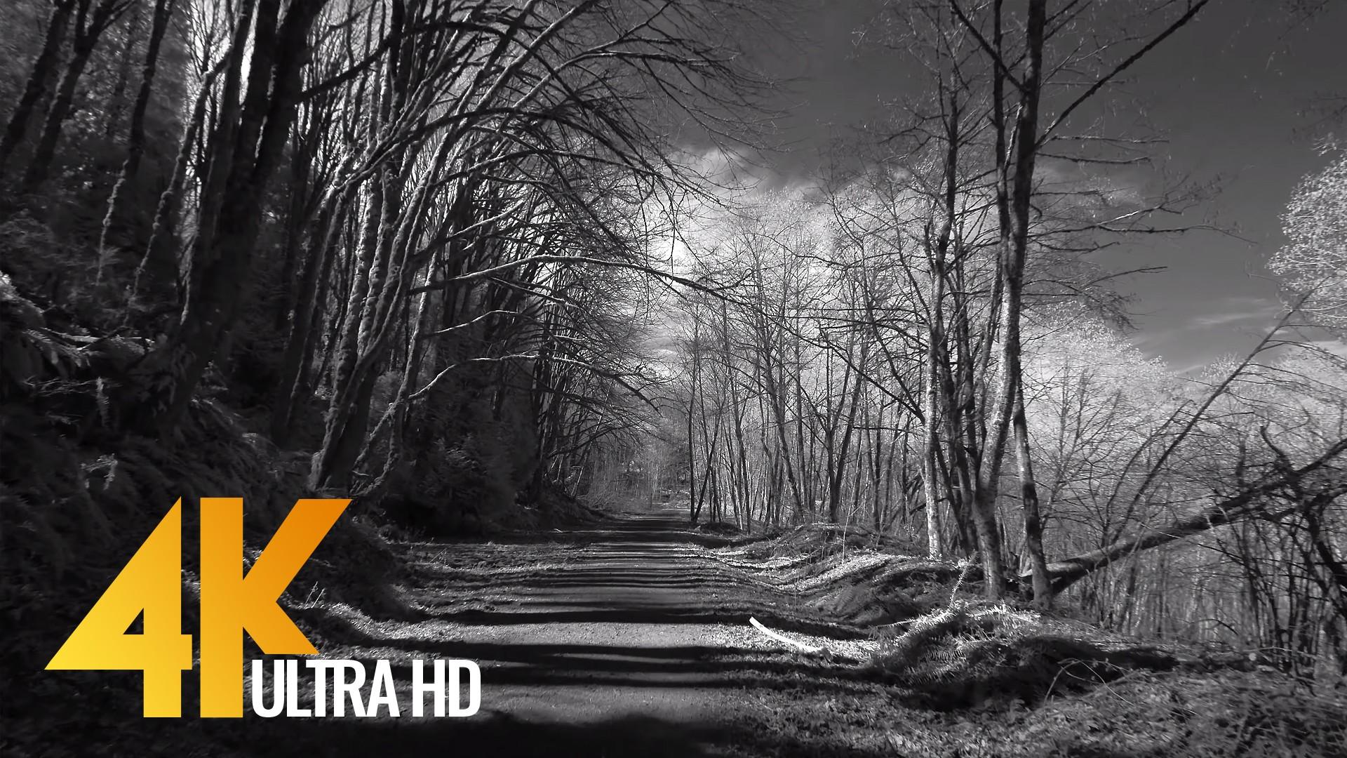 Walking Tour along Coal Creek Trail – Infrared Camera Black & White