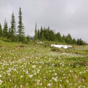 mountain-wildflowers