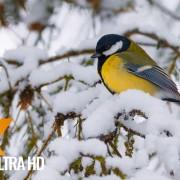 BIRDS IN WINTER RELAX