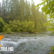 Relaxing River Scenery - Olympic National Park
