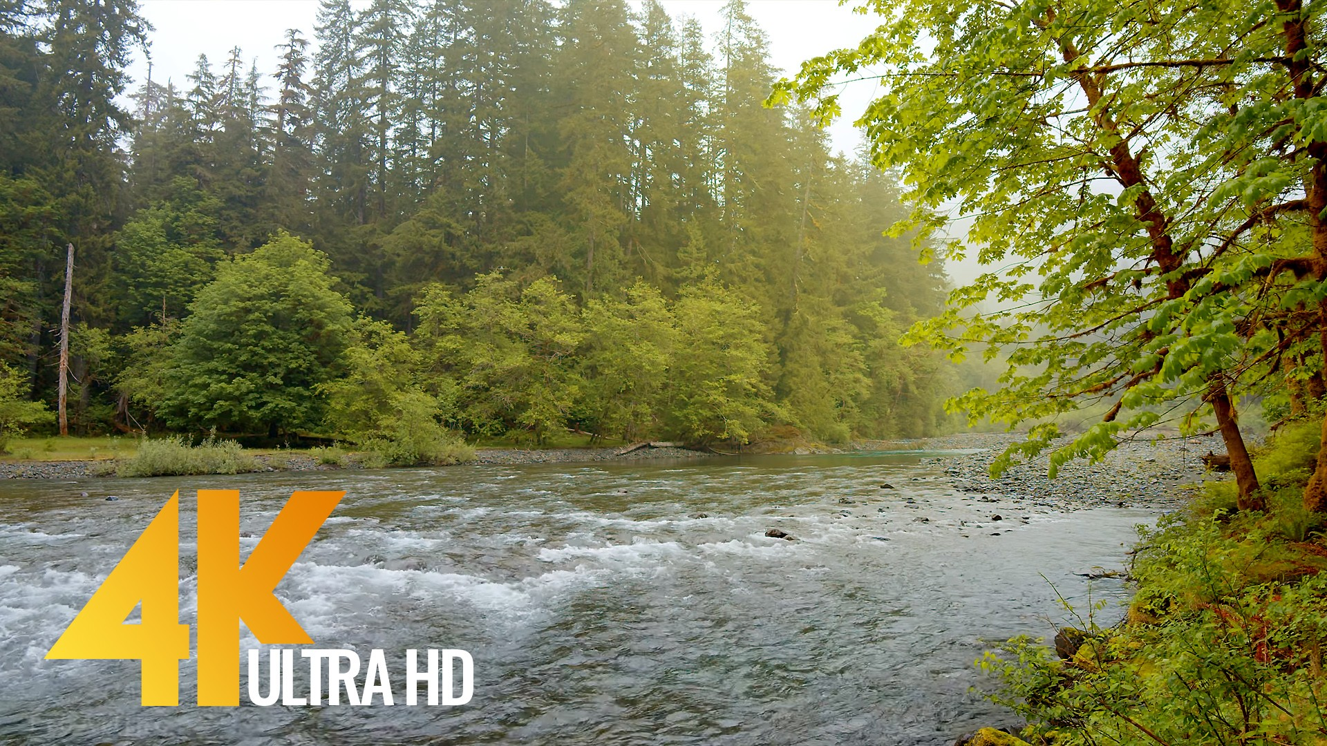 Relaxing River Scenery – Olympic National Park