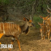 ANTELOPE AFRICA RELAX PART 2