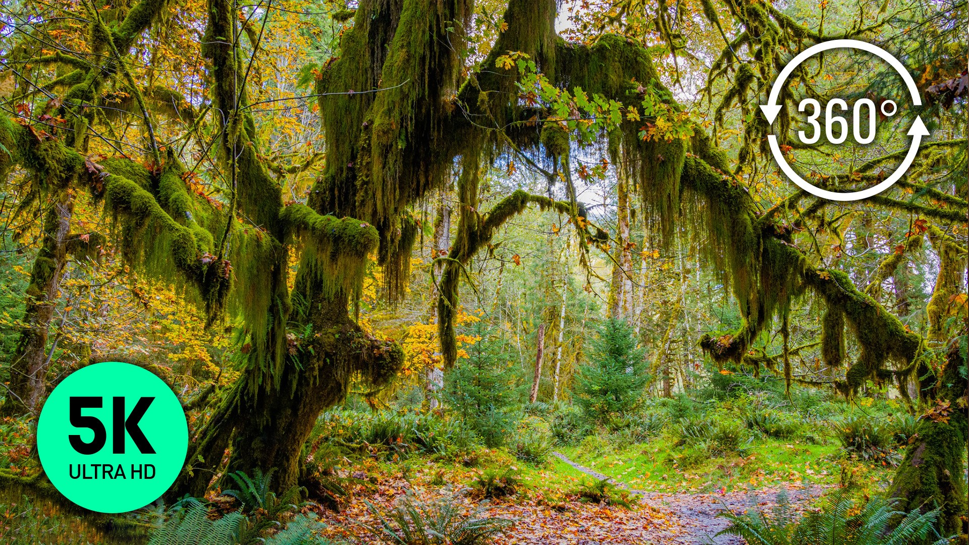OLYMPIC NATIONAL PARK SCENIC ROADS 3 VR