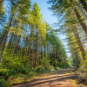 OLYMPIC NATIONAL PARK SCENIC ROADS_2