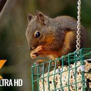 BACKYARD ANIMALS 10 BIT COLOR LONGER VERSION