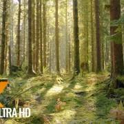 hoh-rain-forest
