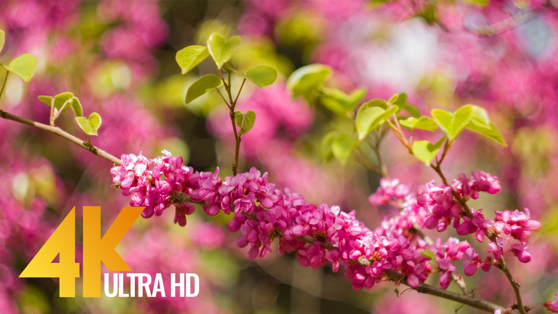 4k Spring Flowers And Autumn Leaves Nature Relax Video Proartinc