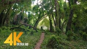 tropikal-forest-walk