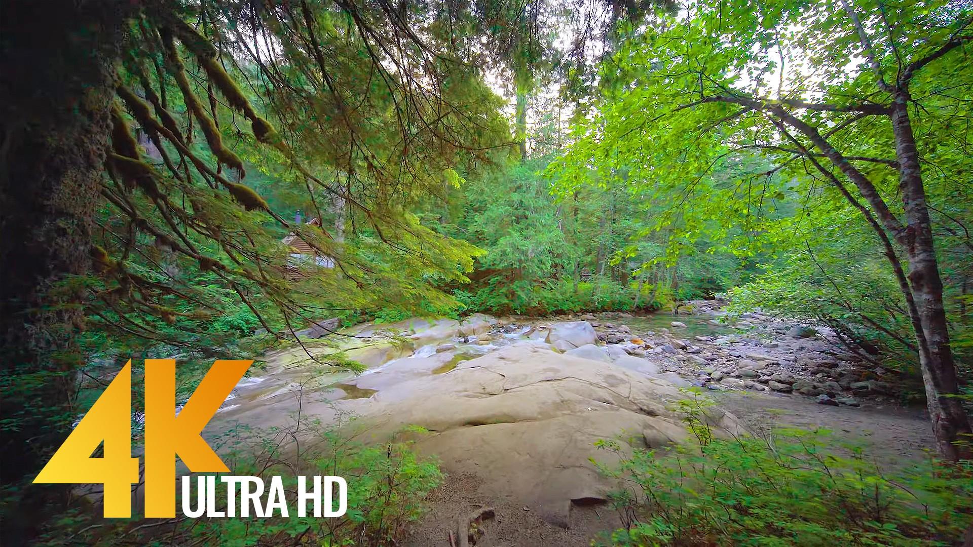 Frankln Falls Trail Virtual Forest Walk