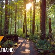 Tradition lake loop trail Issaquah, Washington PREVIEW