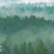 foggy-forest