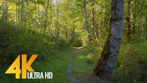 newcastle highlands trail urban trails virtual forest walk