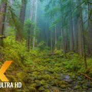 Olympic National Park. 8K Documentary Film