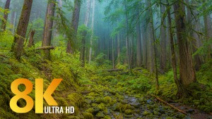 Olympic National Park. 8K Documentary Film