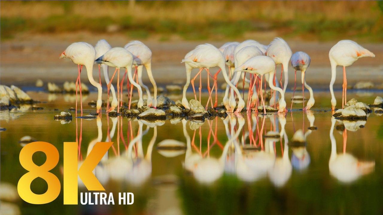 African Wildlife. Birds