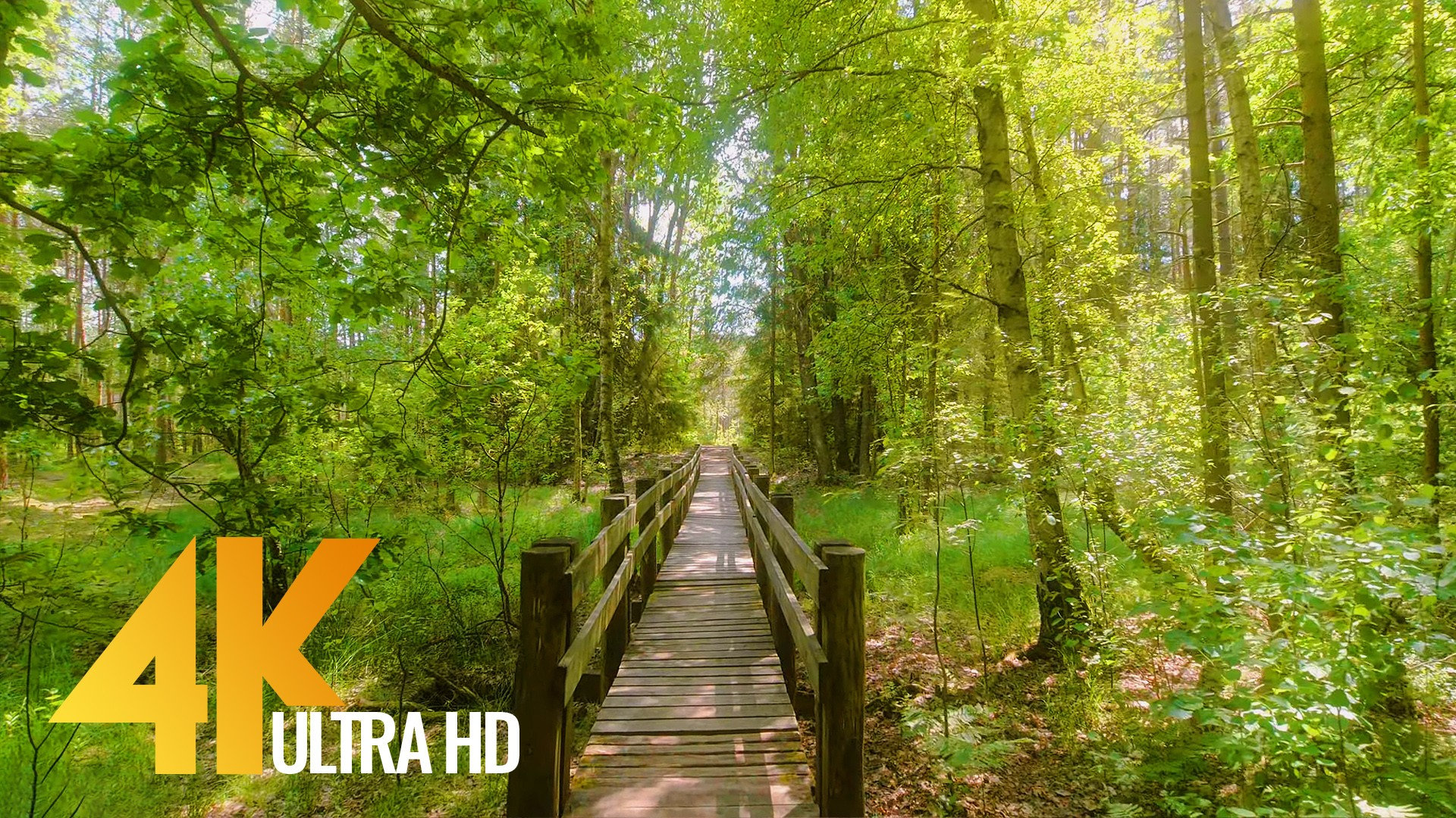 Amazing nature of Lithuania Walking tour PART 2