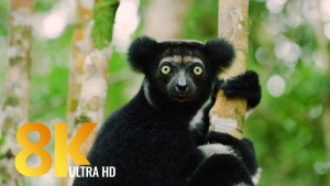 MADAGASKAR FILM 8k