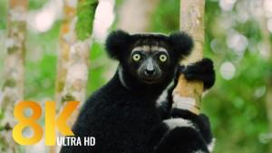 MADAGASKAR FILM 8k