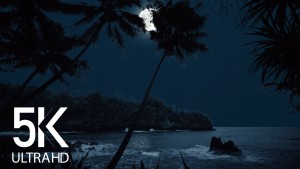 NIGHT IN TROPICAL PARADISE RELAX VIDEO