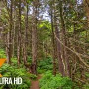 Oregon Waterfalls Wintertime Nature Walking Tour