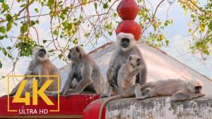 RISHIKESH, DEHRADUN, HIMALAYA, INDIA Urban Documentary_