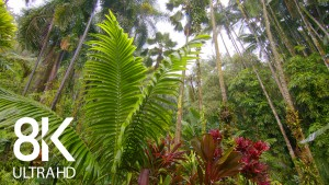 Relaxing Melody of Rain in a Tropical Forest