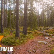 The Scenery of Estonia - Virtual Nature Walk