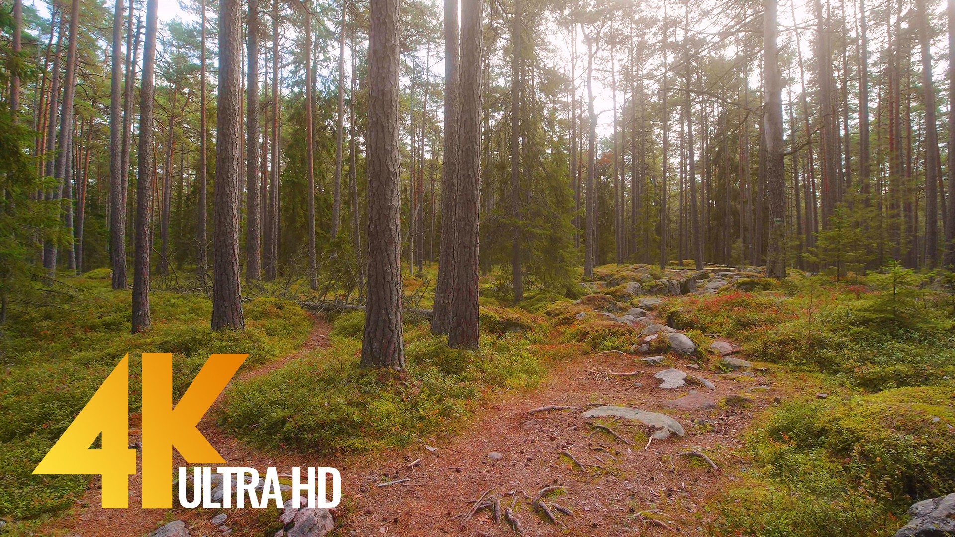 The Scenery of Estonia – Virtual Nature Walk