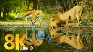 Botswana 2020 FILM