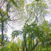 Sounds of Jungle Part 2