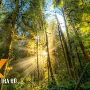 forest-dream-4k